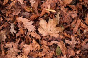 autumn dry dry leaves fall